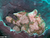 Zubi's frogfish photos (45 perhaps 51 species)- Anglerfisch-Fotos (45 - evt. 51 Arten) - Antennarius